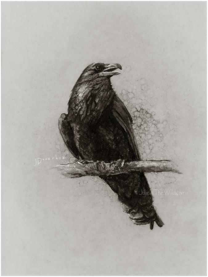 Yellowstone Raven by Julie Doornbos