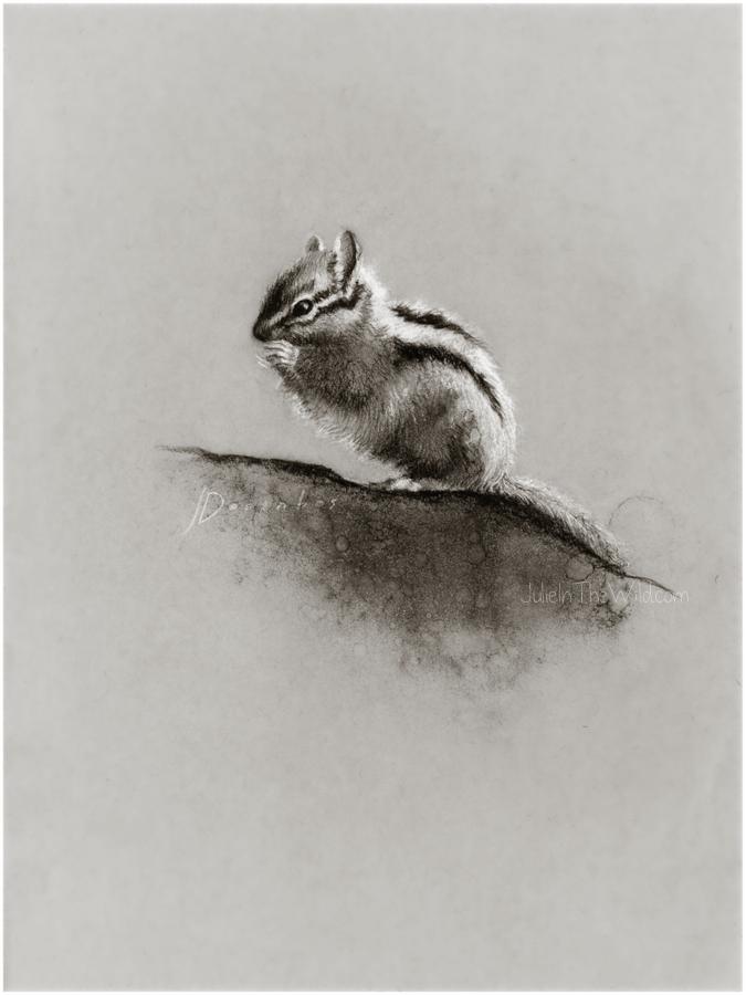 Chipmunk by Julie Doornbos