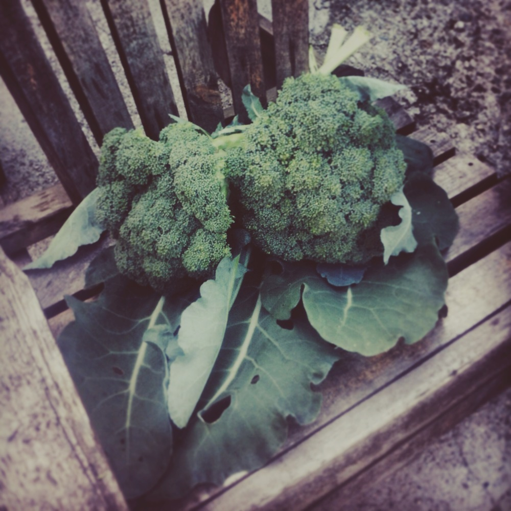 my broccoli!