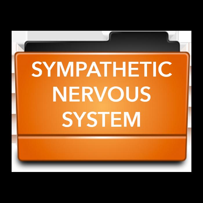 SYMPATHETIC NERVOUS SYSTEM.png