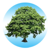 tree_link.png