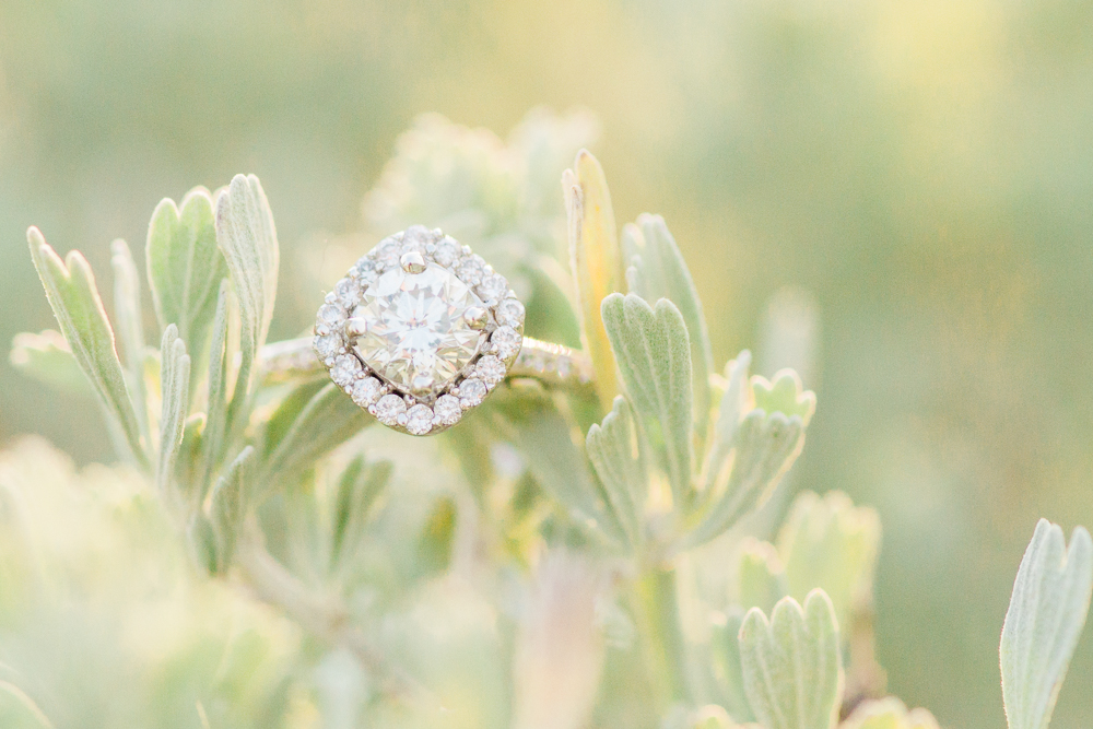 halo engagement ring on sagebrush