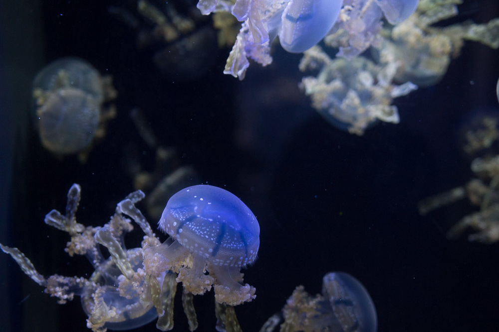 Underwater Dreamscape // Milly's Kitchen