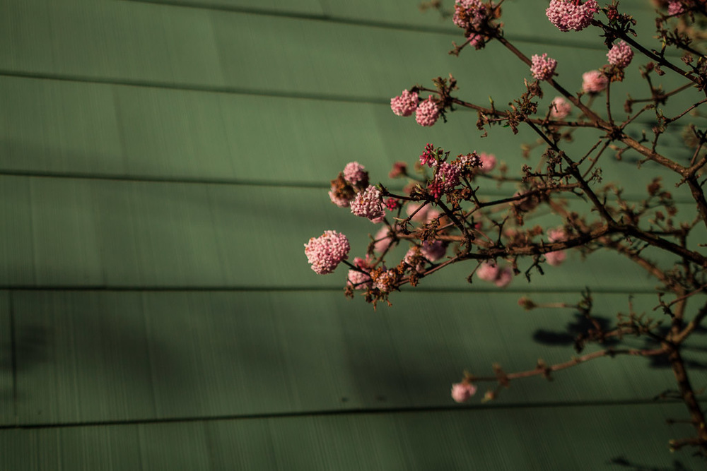 spring blossoms // milly's kitchen
