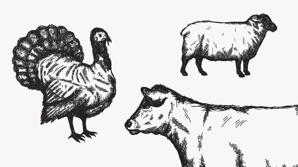 Fori Illustration