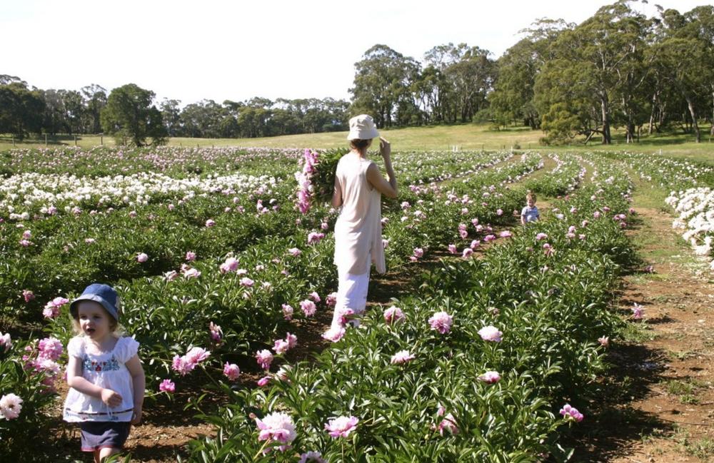 Spring Hill Peony Farm