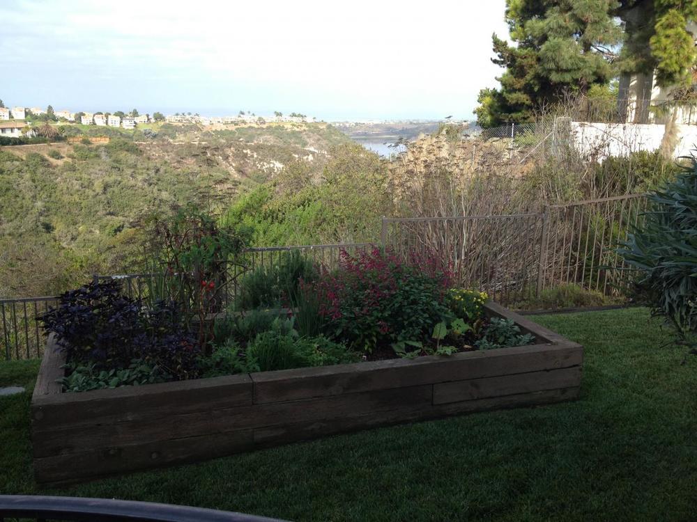 garden7.287155652_large.JPG
