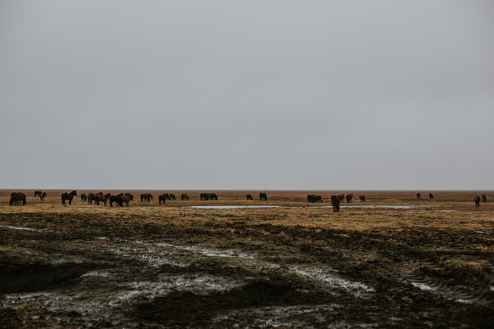 Iceland Engagement - Vow of the Wild 16