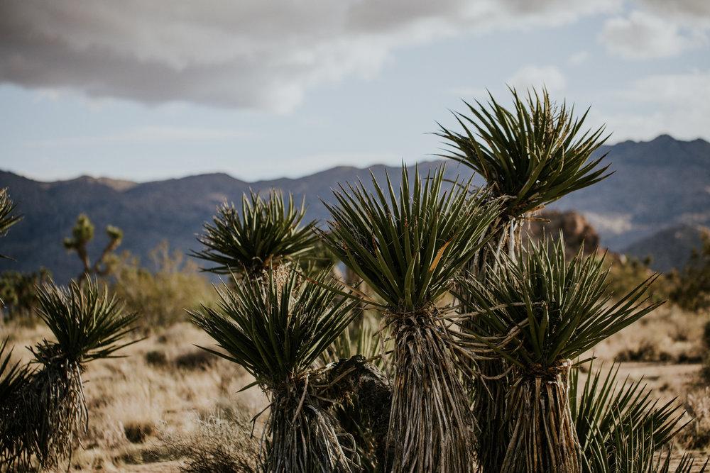 Joshua Tree National Park, California | Colorado Elopement Photographer | Vow of the Wild