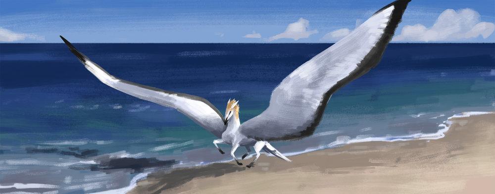 Longwing Pegasus 001 - web.jpg