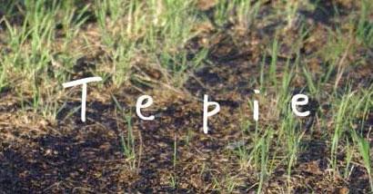 Tepie Logo