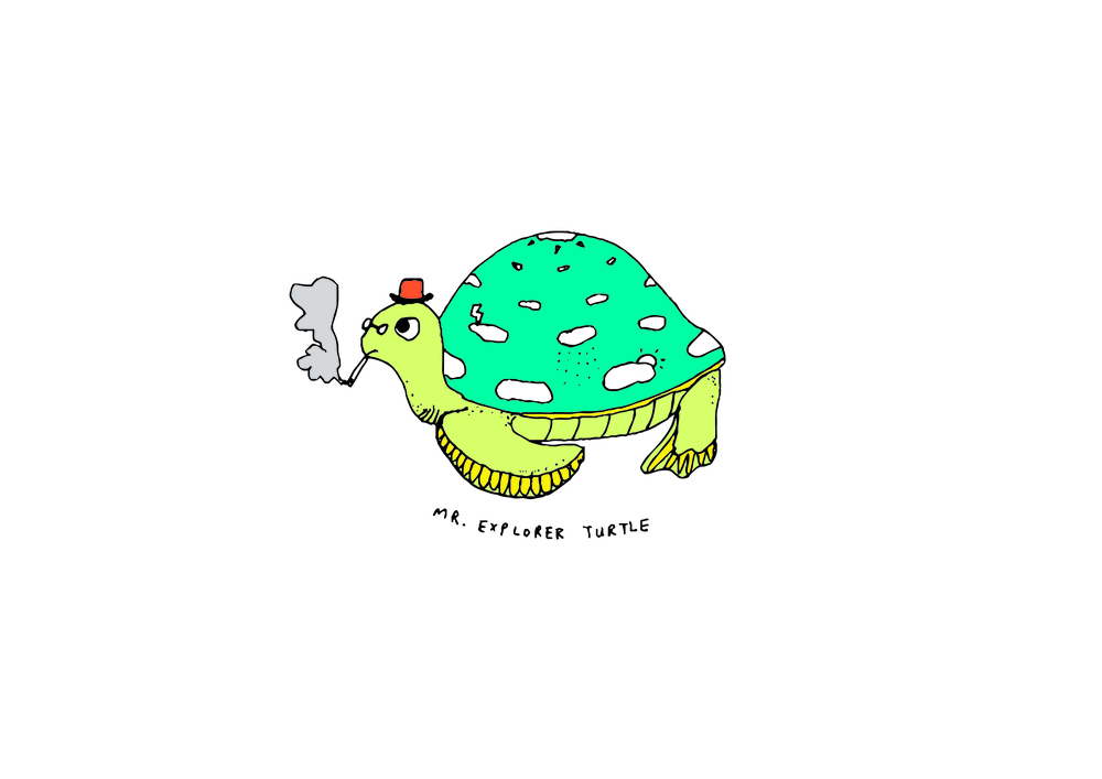 Mr Explorer Turtle