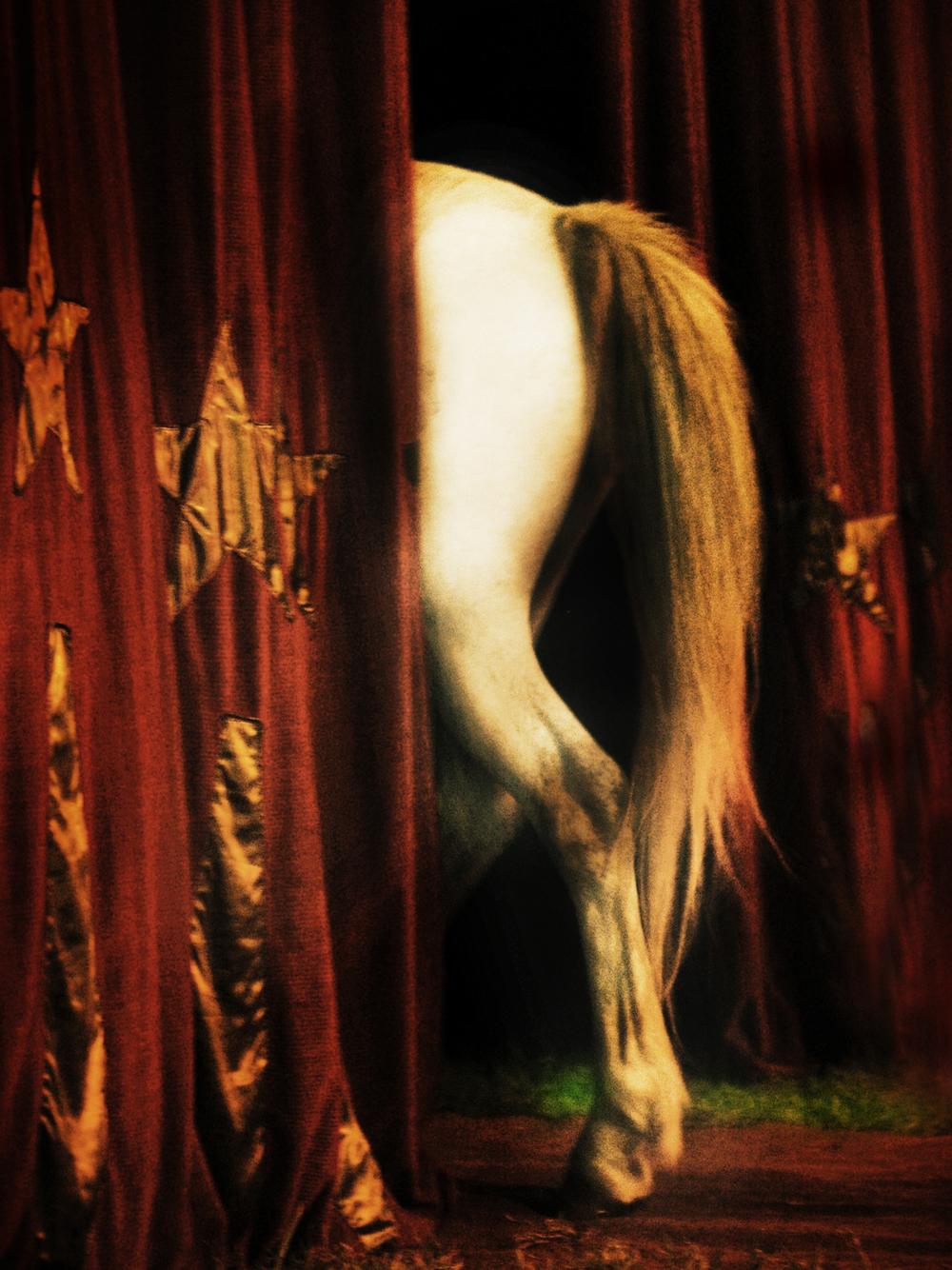 horse back 3.jpg