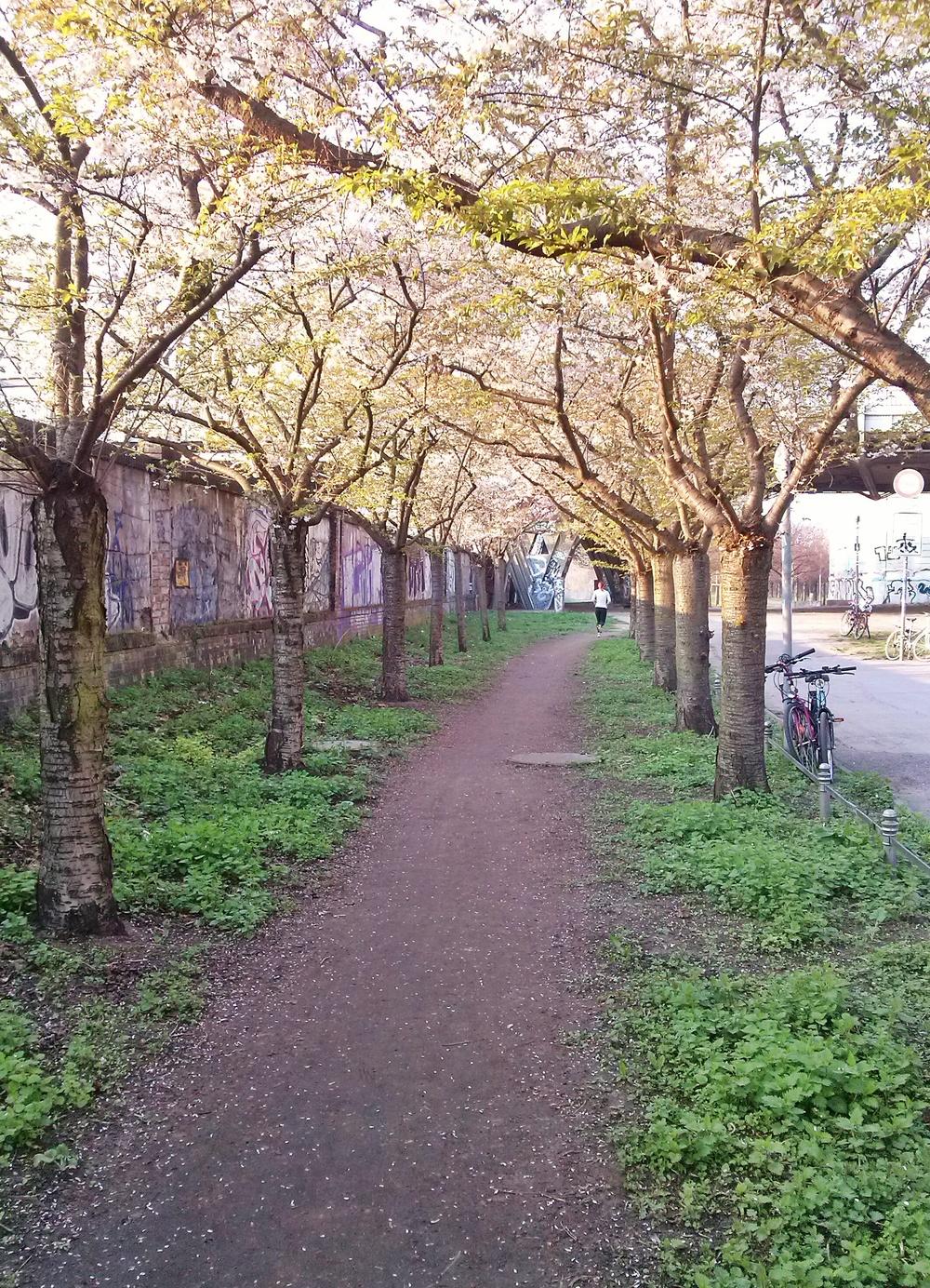 Επίσης λίγο πριν ανθίσουν οι κερασιές, αυτή τη φορά κάτω από τη γέφυρα της Bornholmerstraße.