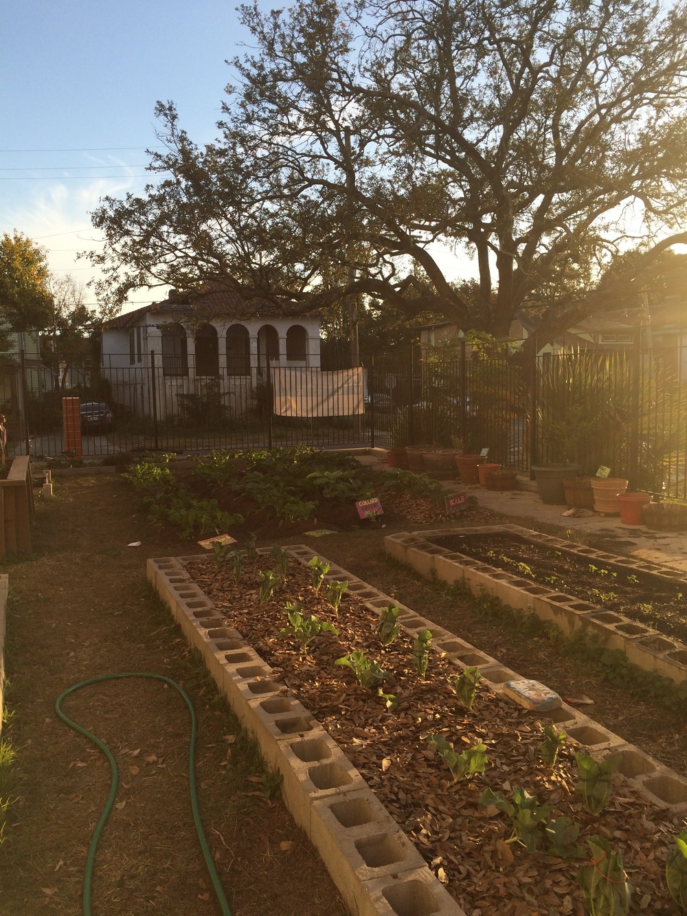 Andrew H. Wilson's school garden in the midst of last year's fall growth