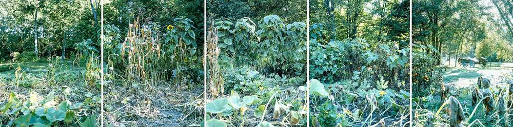 My Father's Garden, 2003