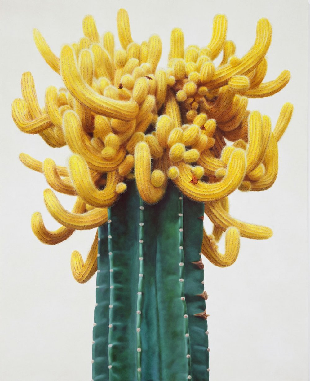 True Vine Studios | Kwang-Ho Lee Cactus Paintings
