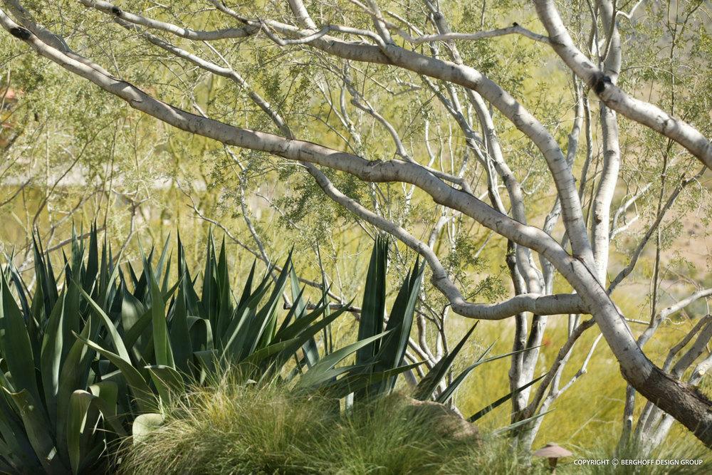arizona-modern-home-landscape-architecture-phoenix-G7-img09.jpg