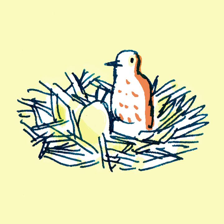 vogelnestje.jpg