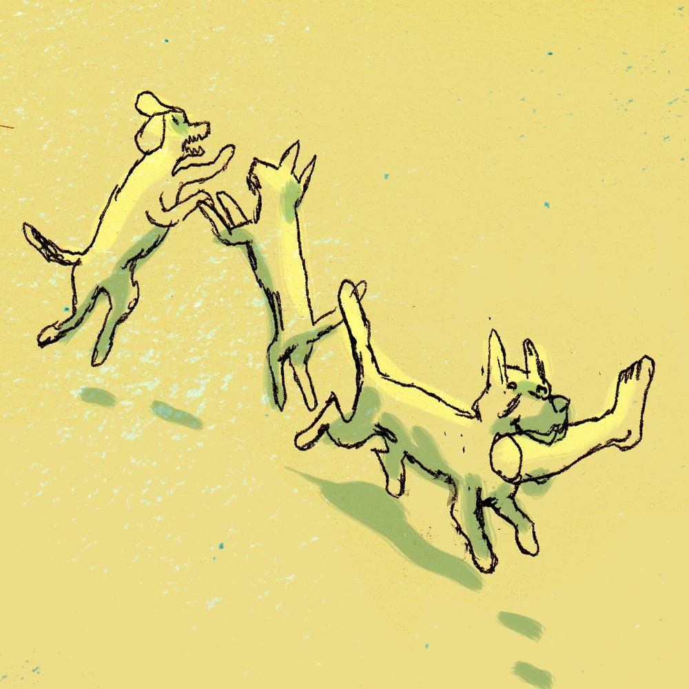 twee honden.jpg