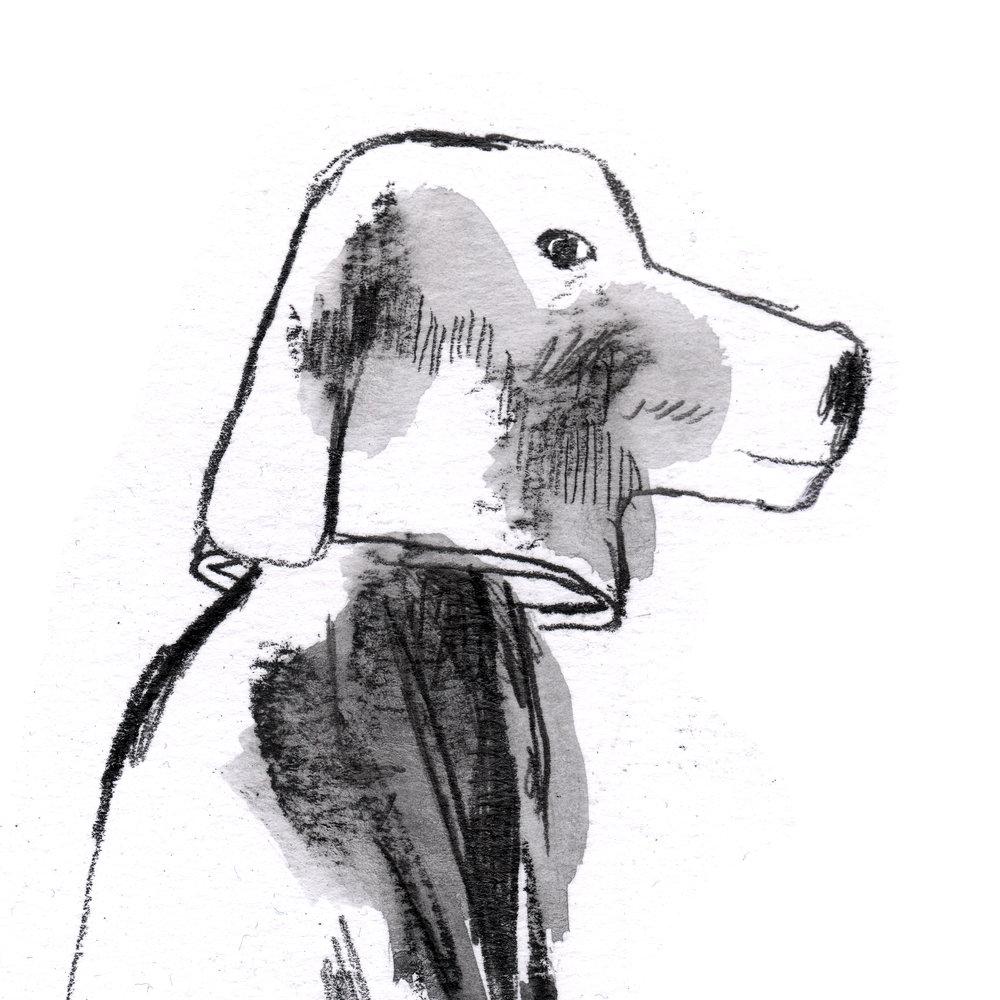 hondenkop bw.jpg