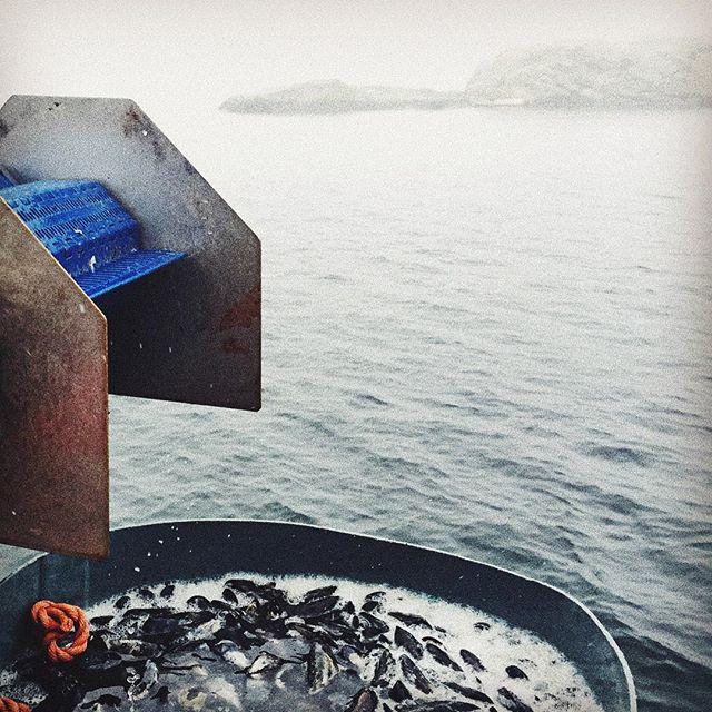 Färdigt!! Nu försöker vi hitta hamnen 🚣🏻 #musslor #dimmigt #bohuslän #madeinbohuslän