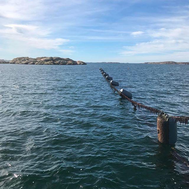 Trevlig helg från musselbåten 🚣 #orustmat #madeinbohuslän #musslor #smakapåvästsverige #westsweden