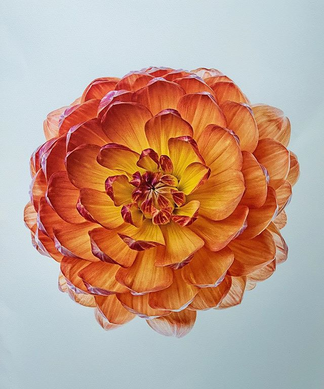 Dahlia // Photo on Watercolor Paper #oliverdunn