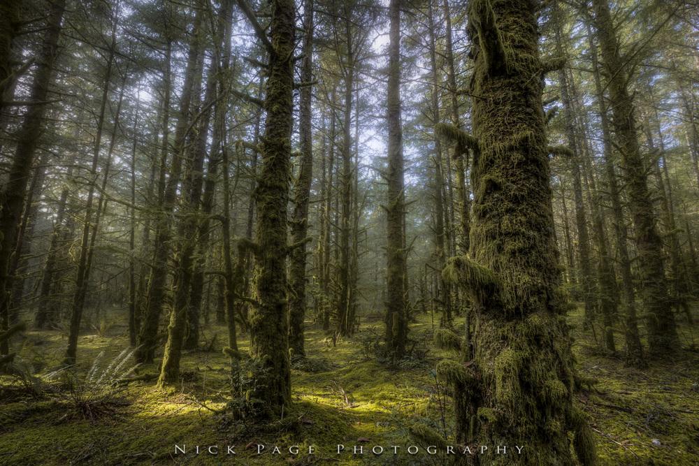 forest of fort stevens