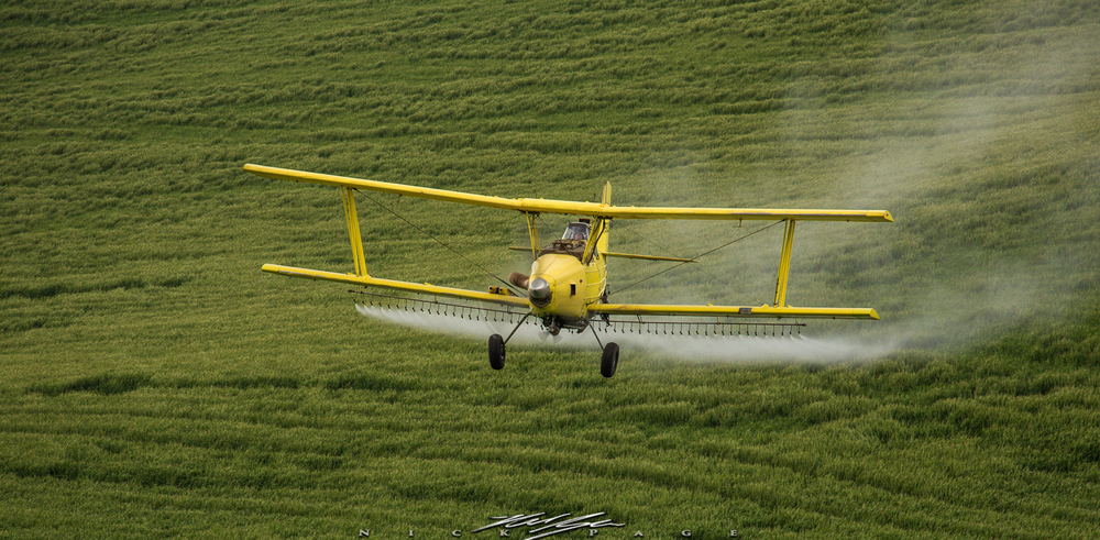 Crop dusters make an appearance every year, and are quite exciting to watch and photograph as they dive bomb the rolling landscapes