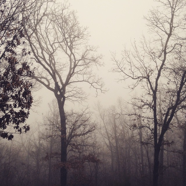 Foggy Morning, Homestead, Prairie Grove, AR