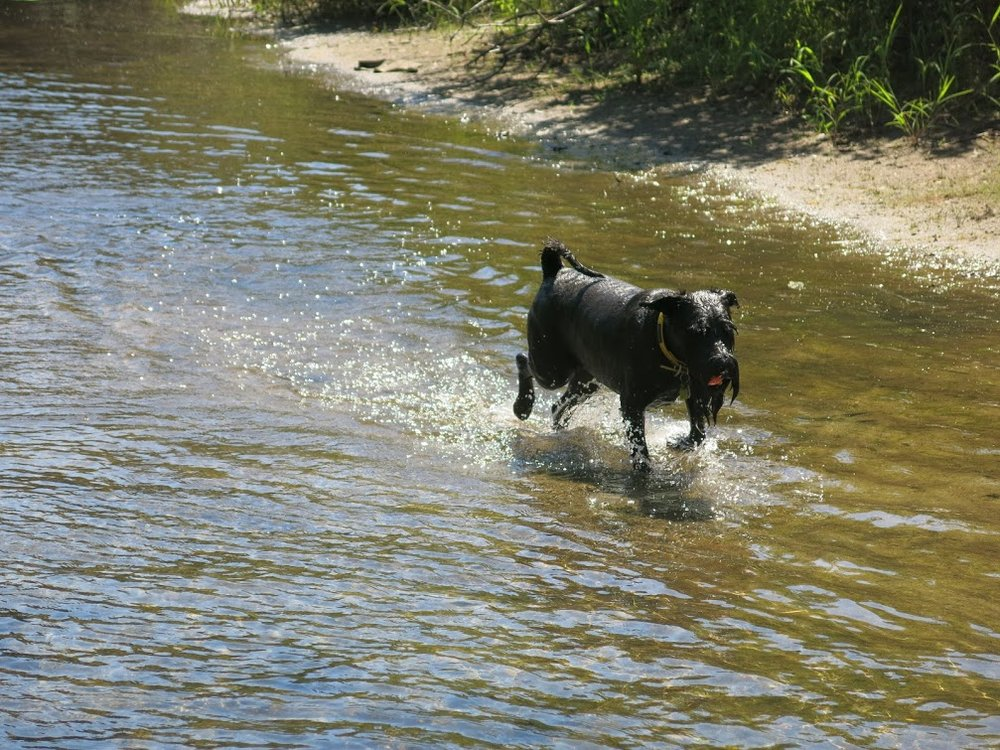 Hubble loves shallow water.