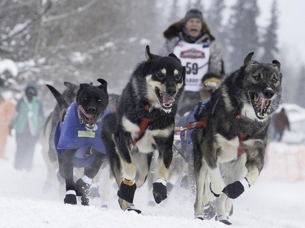 Iditarod Race Re-Start in Alaska