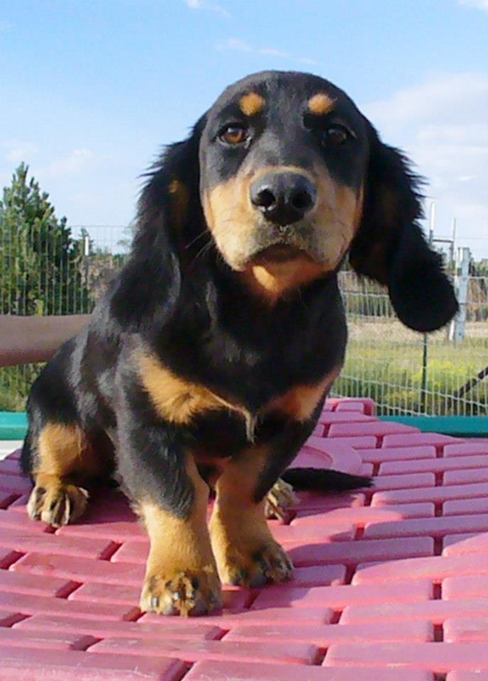 Adoptable Dogs