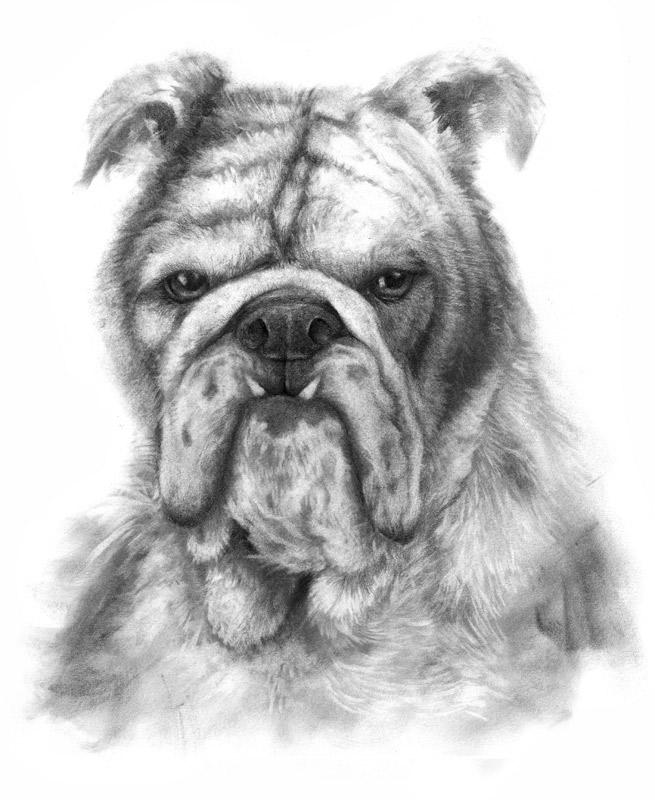 Messy Bulldog