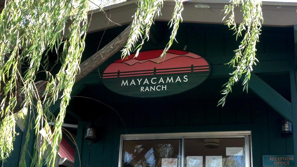 mayacamus.jpg