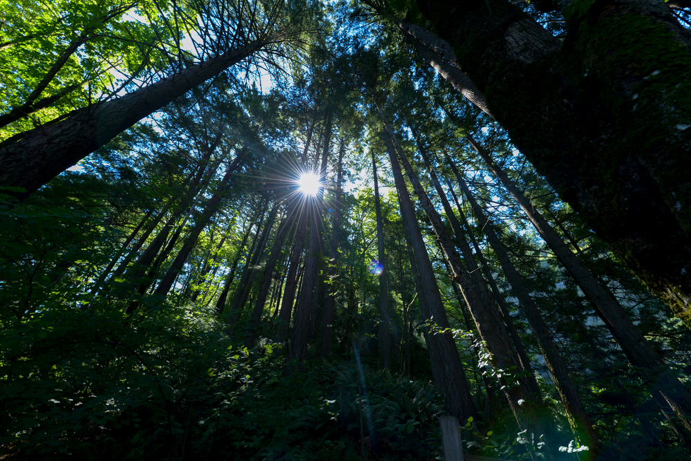 Portland Oregon By Lisa Linh