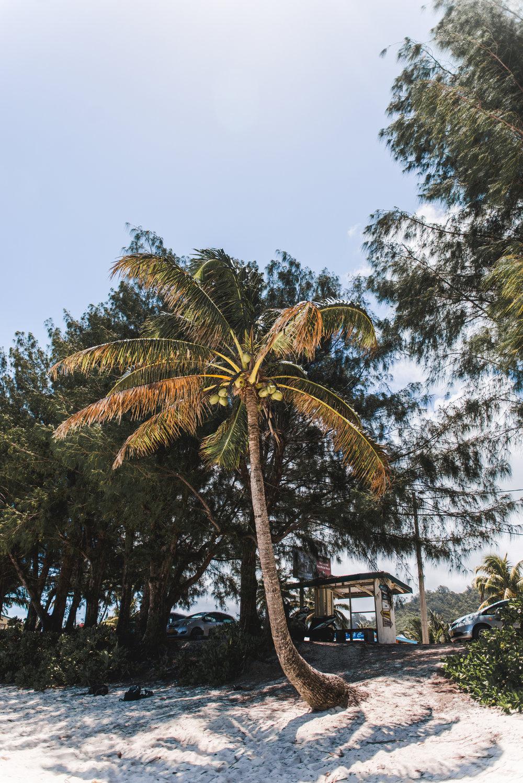 Rarotonga-By-Lisa-Linh