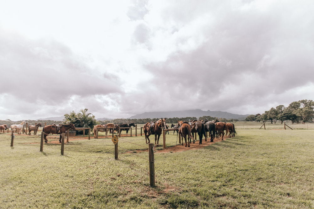 kauai-travel-guide-by-lisa-linh