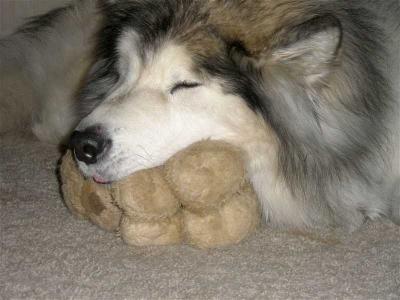 Meadow loved her teddy bear.