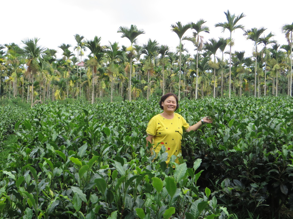 Ms. Wang, the tea farmer and producer, standing among her beloved tea No 18.