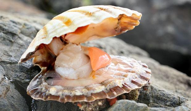 Shellfish ( source )