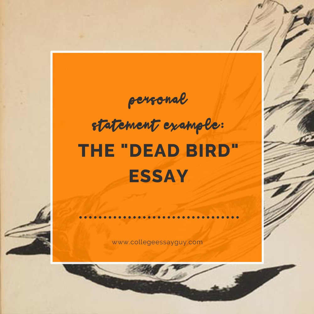 personal statement example the dead bird essay college essay personal statement example the dead bird essay college essay guy get inspired