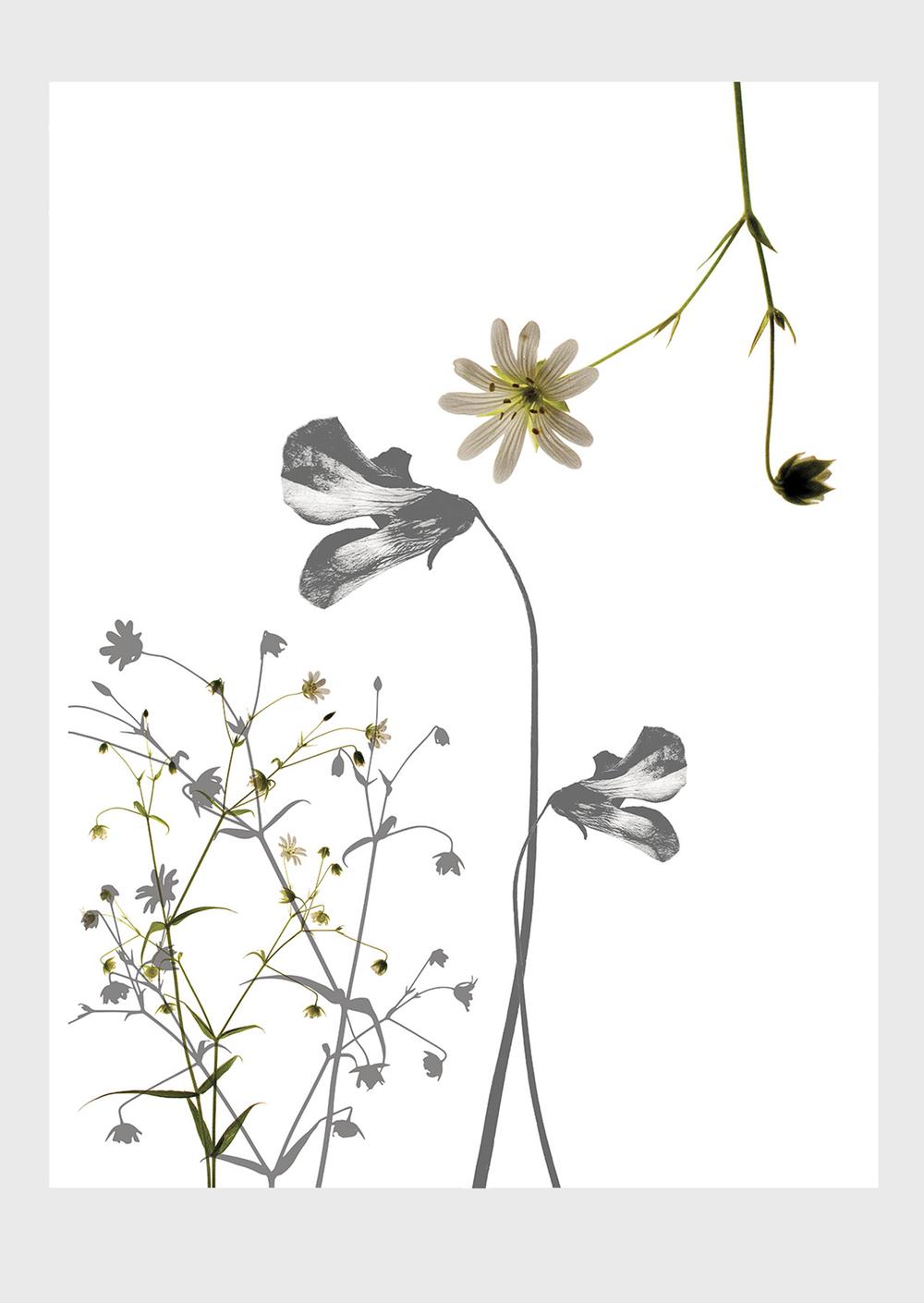 Viola Collage Print