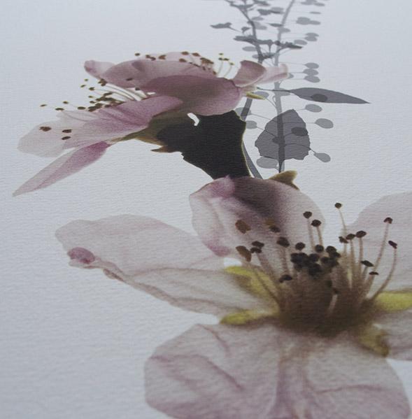 Blossom_detail.jpg