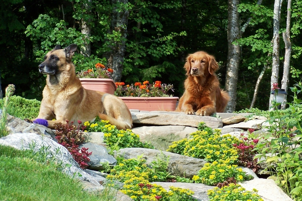 K9 Pistol (1993-2004) & K9 Aspen (1997-2010), Maine Warden Service canines who committed their lives to serving the people of the State of Maine. May their triumphs and devotion never be forgotten.