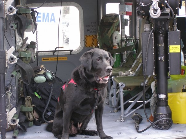 K9 Handler Jim Rawley's dog Max who passed away from cancer. This is Max inside a military medical helicopter.
