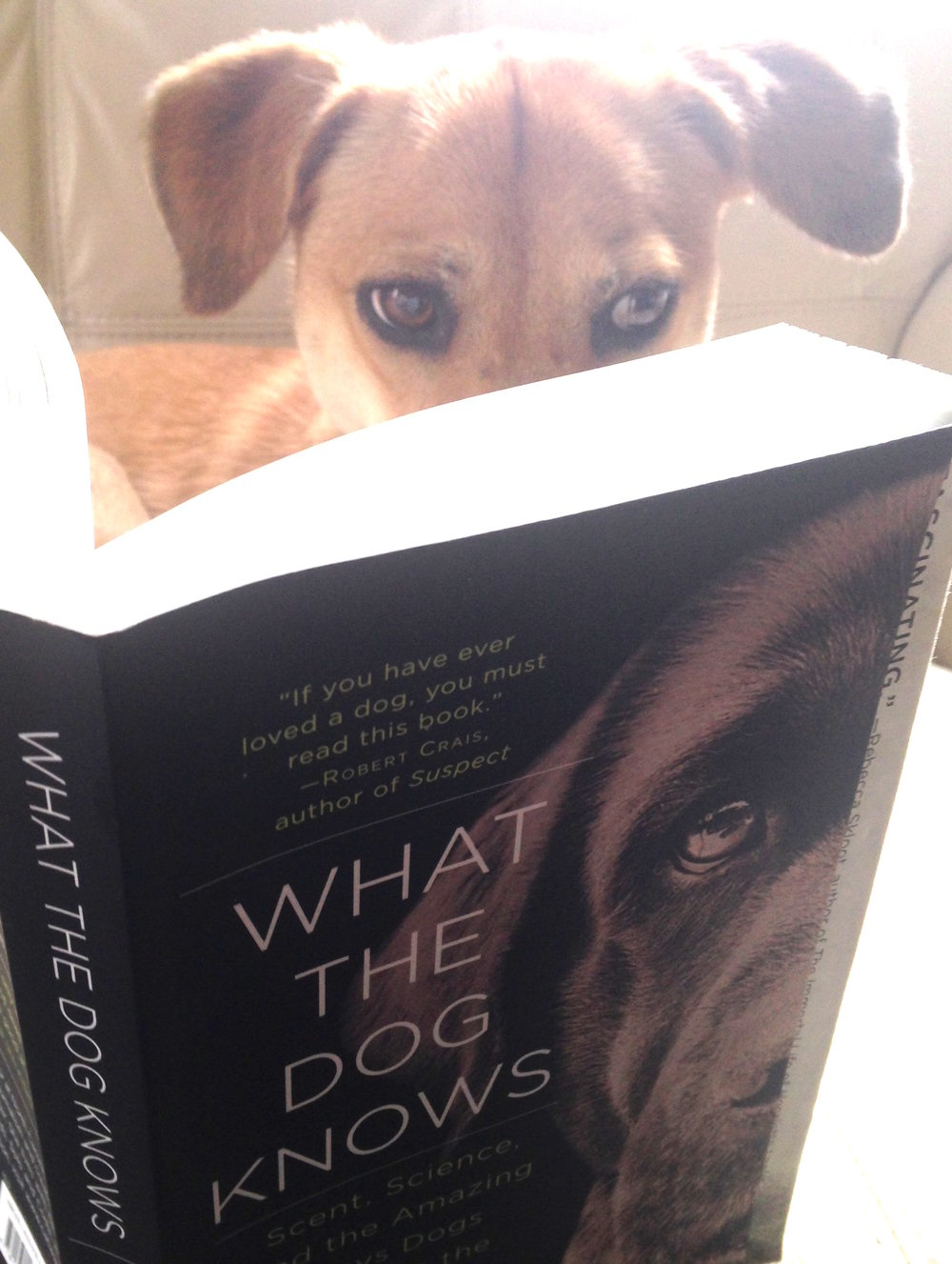 Lucy.  Unstaged photo - caught reading WTDK!