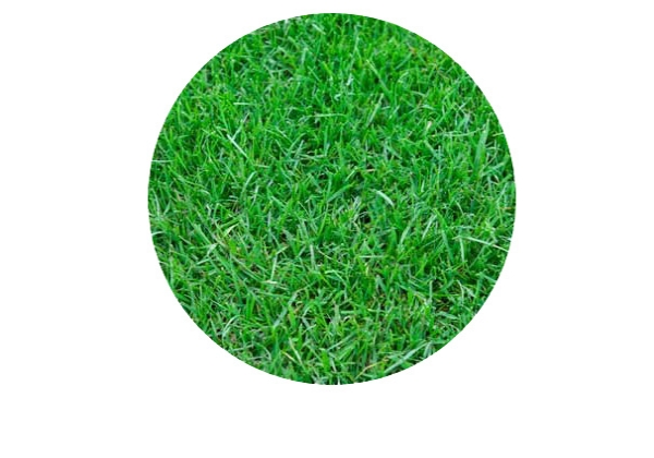 Turf & Artificial turf