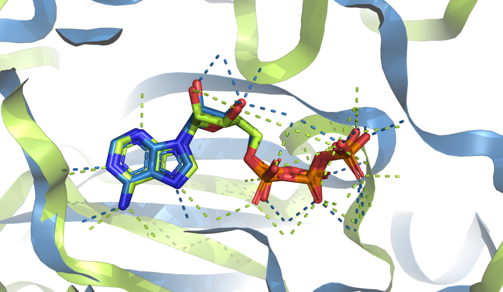 Example of superimposition of 2 ATP molecules from two crystal structures (1atp & 3k5h) and their structural contexts. Two different protein folds bind the same conformation of ATP.